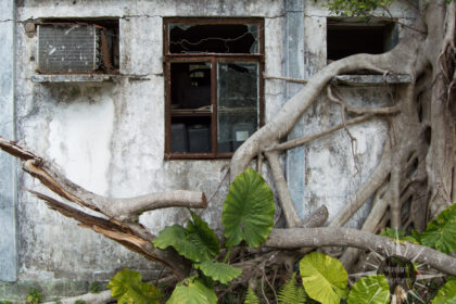 Abandoned house in Hong Kong with a tree growing over it