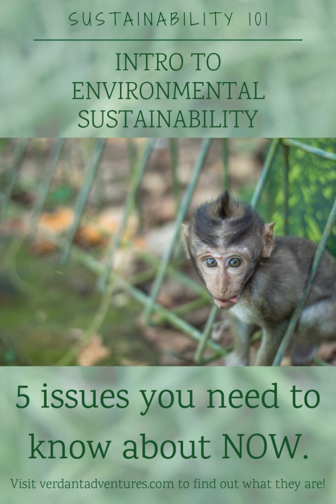 Intro to environmental sustainability | sustainability 101
